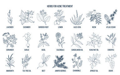 Best herbs for acne treatment