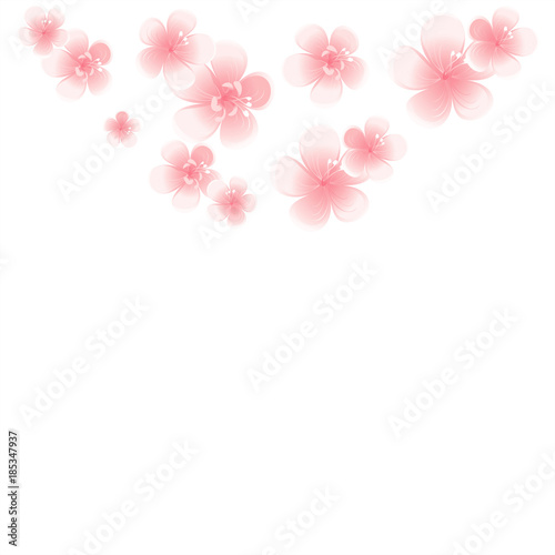 Light Pink Stock Flower
