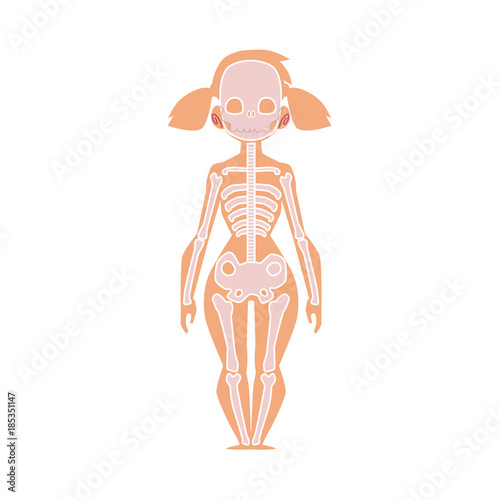 Educational Anatomy Chart Infographics Of Human Skeleton Female