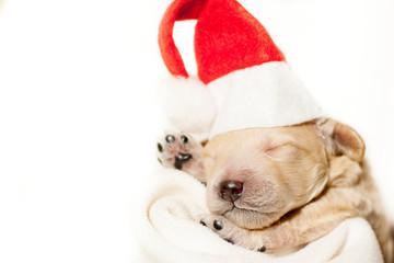 Newborn puppy in a red hat and in a red cape