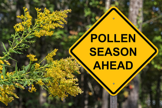 Cuation - Pollen Season Ahead