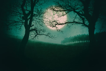 scary landscape at night with trees and full moon