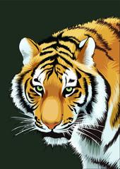 indian bengal tiger face illustration