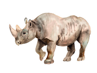 Watercolor image of rhino