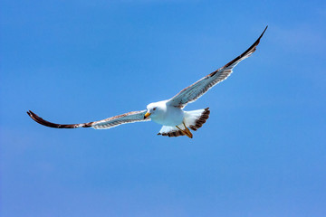 Seagull hovers in sky