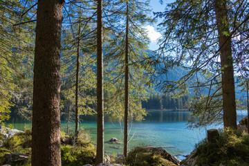 Romantischer Wald am Hintersee in den bayerischen Alpen in Deutschalnd