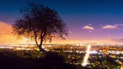 Klistermärke - Lone tree silhouette with Los Angeles cityscape in background at night, 4K UHD