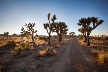 Another dusty desert road, Joshua Tree National Park