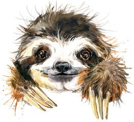 Watercolor sloth illustration. tropical animal