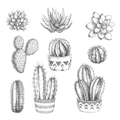 Vector set of houseplants. Vintage hand drawn illustrations with cactus and succulents in engraving style. Sketches of floral objects isolated on white for design