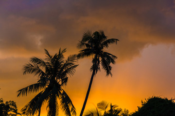 tropical view landscape with palm tree againtst sunrise.