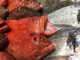 Fische auf Eis