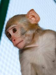 Fotobehang Aap monkey in a cage look away