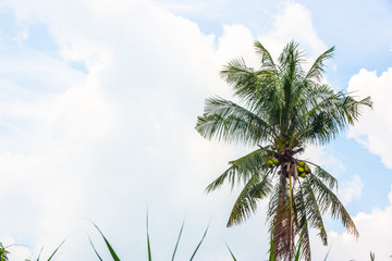 tropical view landscape with palm tree againtst blue sky.