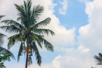 tropical view landscape with palm tree againtst blue sky.