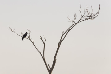 crow on tree and leafless tree branches