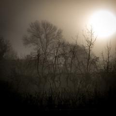 Lever de brume ensoleillé sur arbres décharnés