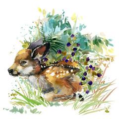 fawn. wild animals watercolor illustration
