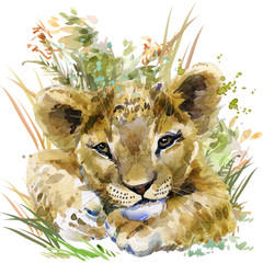 lion cub. wild animals watercolor illustration
