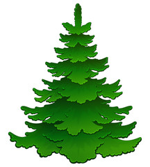 Cartoon young green spruce. Vector.
