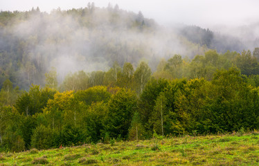 fog and low clouds over the forested mountains. mysterious scenery in deep autumn
