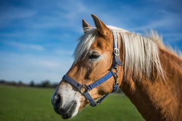 Horse Grazing On Pasture