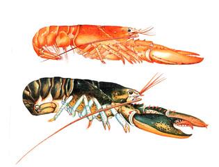 Illustration of a lobster
