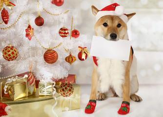 Japanese shiba inu dog with a greeting card