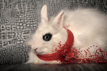 white rabbit  with a red necklace on the neck