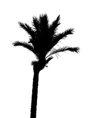 Isolated Silhouette of Palm Trees on White Background. Vector Il