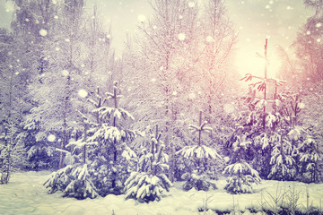 Winter landscape of snowy forest with christmas trees. Xmas background. Snowflakes shining on sunlight of sunrise at morning. Snowfall in forest