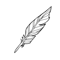 Vector hand drawn sketched feather