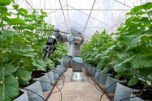 Smart robot installed inside the greenhouse  For the care