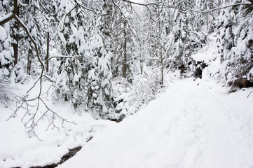 Winter, snow and forest