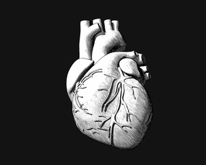 Monochrome engraving drawing human heart on dark BG