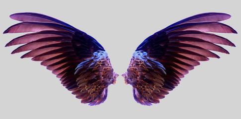 wings of bird on white