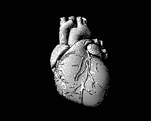 White engraving human heart illustration on dark BG