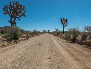 Fototapete - Low Angle of Desert Road Through Joshua Trees