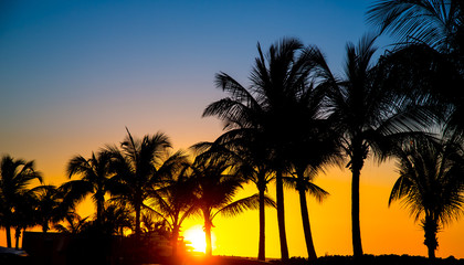 Silhouetted Palm Trees at Sunset on Tropical Island