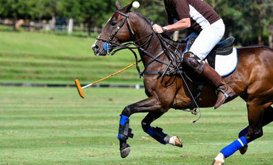 Action of Horse Polo