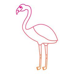 flamingo exotic bird decorative flat design vector illustration