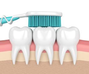 3d render of teeth with toothbrush