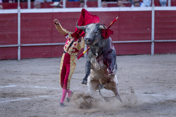 Bullfighter and bull, facing each other, in the arena of the bullring.