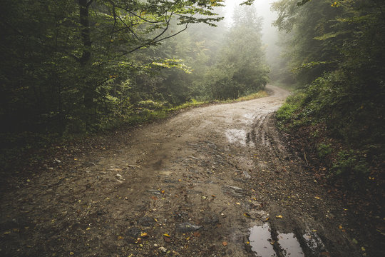 Road through the misty woods