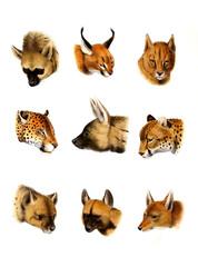 llustration of wild animals