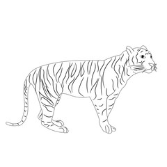 isolated sketch of a tiger is worth