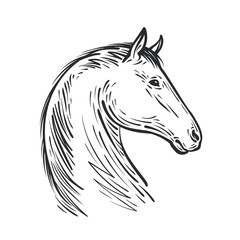 Horse sketch. Farm animal, steed vector illustration