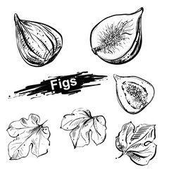 Hand drawn illustration set of fig, leaf. sketch. Vector eps 8