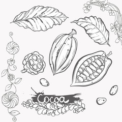 Hand drawn vector illustration set of monochrome cocoa, leaf, bean. sketch. Vector eps 8