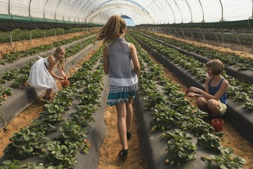 Girl walking in strawberry plantation in greenhouse